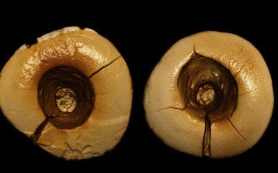 El empaste dental más antiguo conocido: hecho con plantas en la Italia de hace 13.000 años