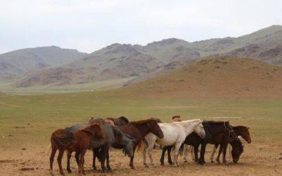 Los temibles mongoles eran dentistas de caballos hace 3.000 años